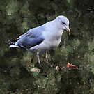 Seagull in the Park by Forfarlass