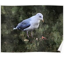 Seagull in the Park Poster