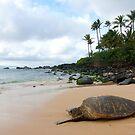 Basking Sea Turtle by David Kocherhans