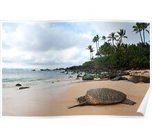 Basking Sea Turtle Poster