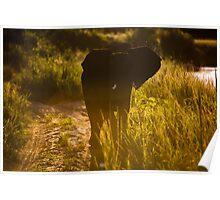 Elephants South Africa Endangered Poster