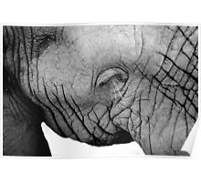 Elephant Close Up South Africa Poster