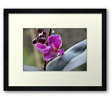 The Purple Orchid Framed Print