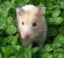 Syrian Hamster In Clovers by aimeadorer