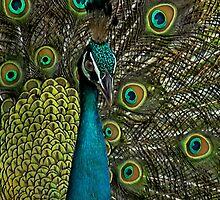 PEACOCK THROW PILLOW by ✿✿ Bonita ✿✿ ђєℓℓσ
