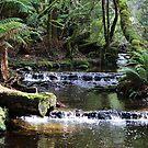 Mt. Feild, Tasmania by Kayleigh Walmsley