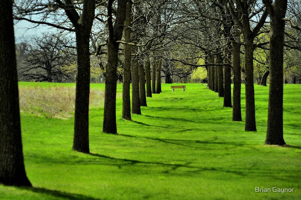 Peaceful Symmetry by Brian Gaynor