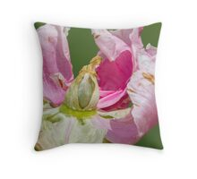 dried peony in the garden Throw Pillow