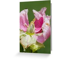 dried peony in the garden Greeting Card