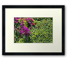 Purple Bougainvillea Greenery Framed Print