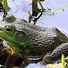The Most Handsome Frog in the Pond by Rusty Katchmer