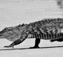 Gator Walking Sticker