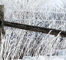 Hoar Frost on the Fence by JMcCombie