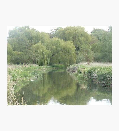 River with willow trees Photographic Print