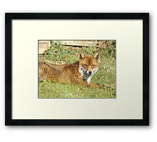 Freddie The Fox Framed Print