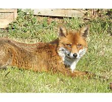Freddie The Fox Photographic Print
