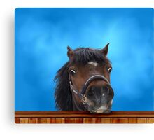 Pony, cheeky head study. Canvas Print