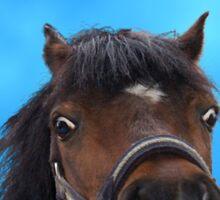 Pony, cheeky head study. Sticker