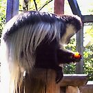 Black And White Colobus Monkey by Shawna Rowe