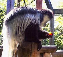 Black And White Colobus Monkey by Shawna Rowe