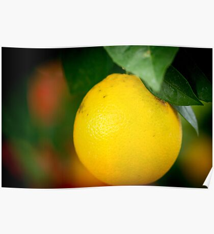 A Citrus in Winter Poster