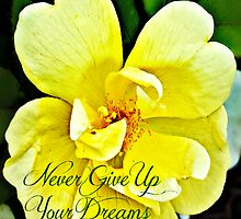 Never Give Up Your Dreams by Scott Mitchell