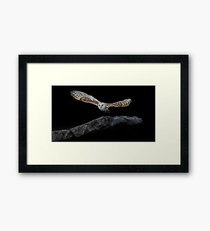 Barn Owl by Gary Stringfellow Framed Print