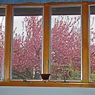 The Splendor of the Cherry Tree by Anne Gitto