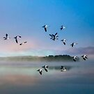 Flight of the Snow Geese by John Rivera