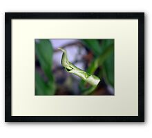 ©NS Spring Time IA Framed Print