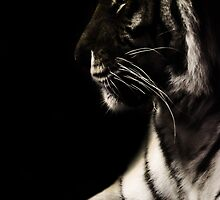 Tiger Profile by liberthine01