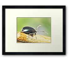 ©NS Beetle In Balance ONFX. Framed Print