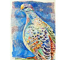 Common Bronzewing Photographic Print
