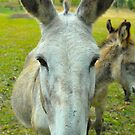 Can I Help You ? by Penny Smith