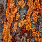 Nature's Fingerprint  - Mount Wilson and Mount Irvine NSW Bark Collection - The HDR Experience by Philip Johnson