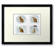 Meerly Max The Marvelous Cat Framed Print