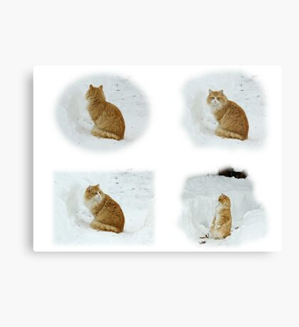 Meerly Max The Marvelous Cat Canvas Print
