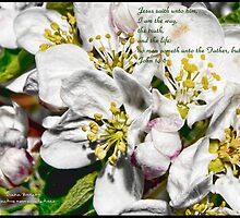 Bible Verse John 14:6  by DianaBozart