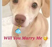 Honey holding an engagement ring proposing by Princess1222