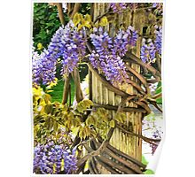 Wysteria Climbing Poster