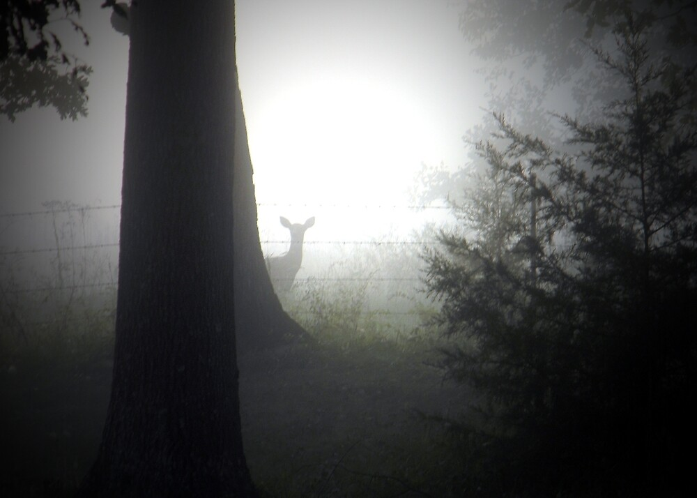 ~ A Deer In the Mist ~ by Brion Marcum