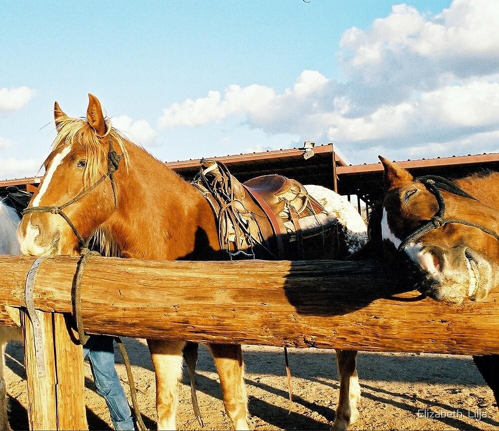 Horses In Arizona by Elizabeth  Lilja