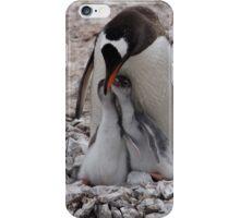 Antarctica Gentoo penguins and chicks iPhone Case/Skin