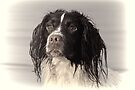 One more of Molly,,,,,,Exeter Devon UK by lynn carter