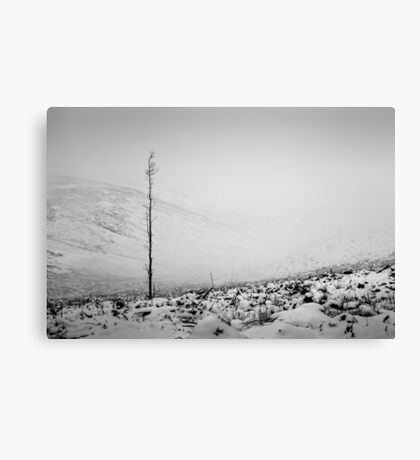 Deforestation - Northumberland Canvas Print