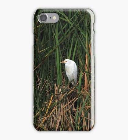 Snowy Egret Among Reeds iPhone Case/Skin