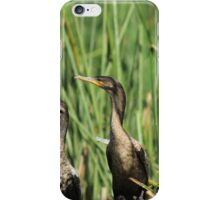 Neotropical Cormorants on Reeds iPhone Case/Skin