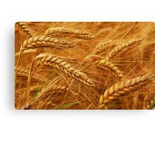Grain Field Canvas Print