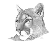 Mountain Lion Photographic Print