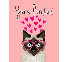 Siamese Cat valentines day love hearts gift for cat lady cute kitten funny cats Photographic Print